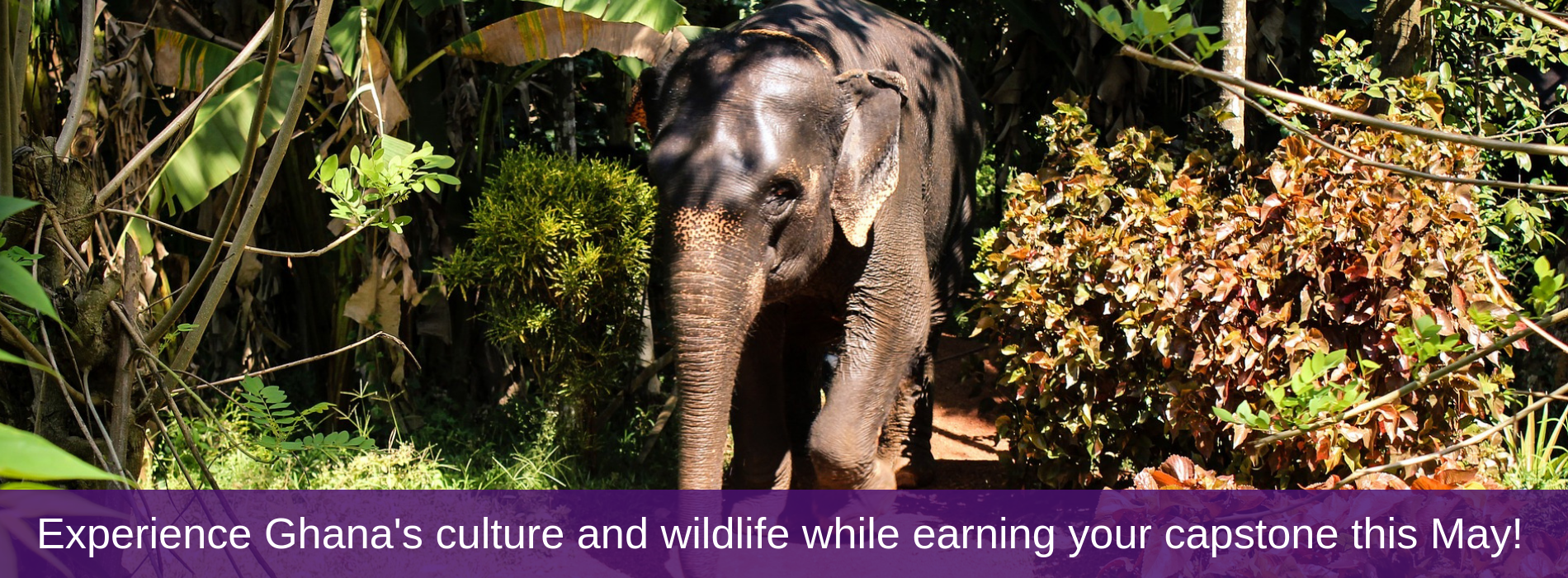 Experience Ghana's culture and wildlife while earning your capstone this May!
